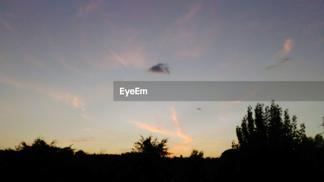silhouette, sunset, tree, nature, animals in the wild, animal themes, sky, beauty in nature, no people, outdoors, low angle view, one animal, cloud - sky, scenics, flying, animal wildlife, bird, day