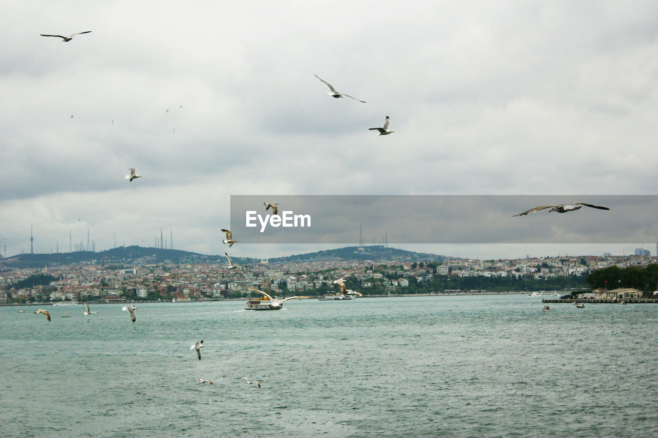 seagulls flaying on the istanbul background,the bosporus is a narrow