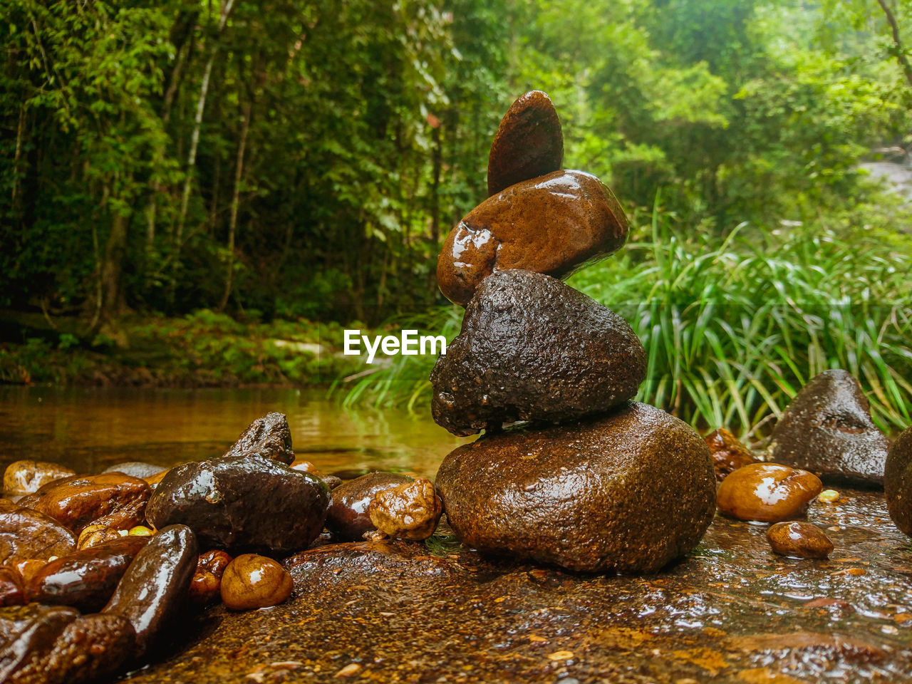 tree, water, no people, solid, nature, forest, rock, plant, day, stone - object, rock - object, zen-like, food, food and drink, balance, focus on foreground, outdoors, tranquility, stack, pebble