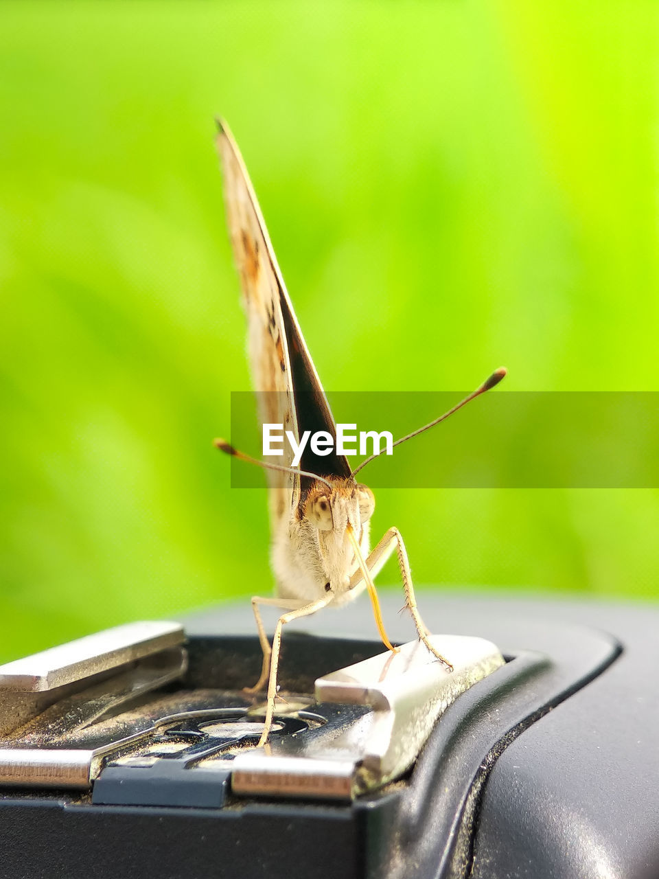 animal, one animal, animal themes, invertebrate, animal wildlife, insect, animals in the wild, no people, close-up, day, focus on foreground, animal antenna, selective focus, animal body part, nature, green color, outdoors, grasshopper, zoology, wall - building feature, butterfly - insect