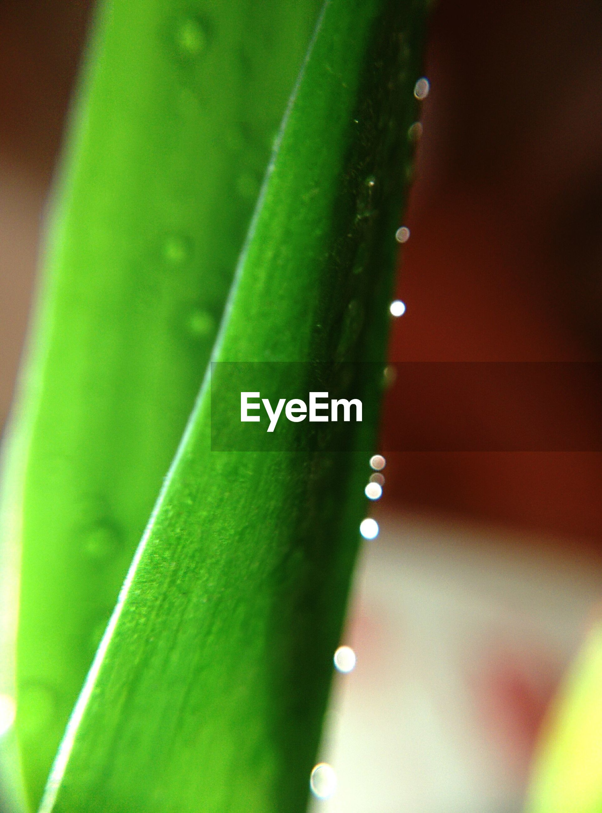 green color, growth, drop, close-up, leaf, selective focus, nature, plant, freshness, wet, water, beauty in nature, focus on foreground, dew, fragility, green, blade of grass, outdoors, day, no people