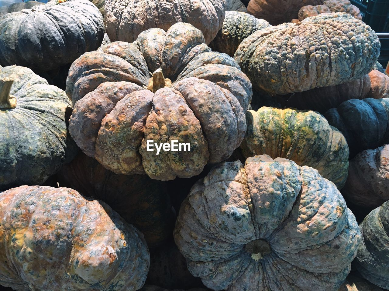 food and drink, food, freshness, healthy eating, no people, full frame, pumpkin, wellbeing, abundance, still life, large group of objects, backgrounds, day, textured, retail, close-up, market, vegetable, for sale, outdoors