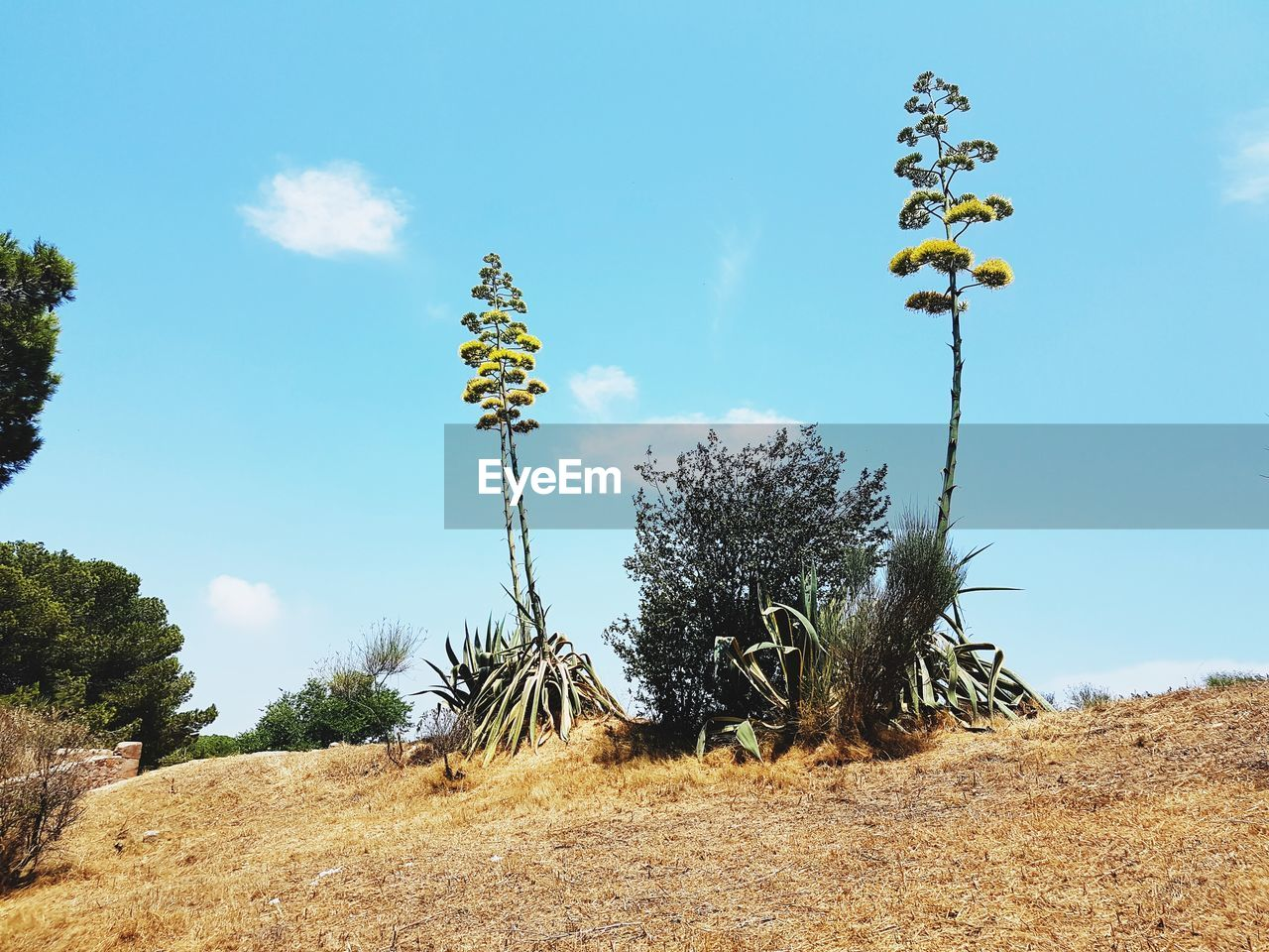 tree, day, nature, growth, beauty in nature, sky, outdoors, no people, low angle view, tranquility, flower, sunlight, plant, blue, scenics, clear sky, fragility, freshness
