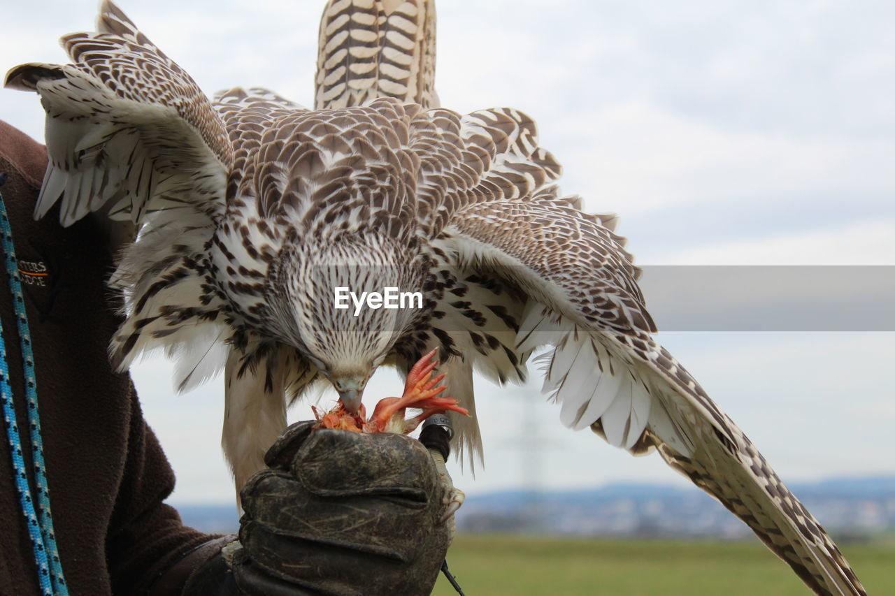 LOW ANGLE VIEW OF OWL HOLDING BIRD AGAINST SKY