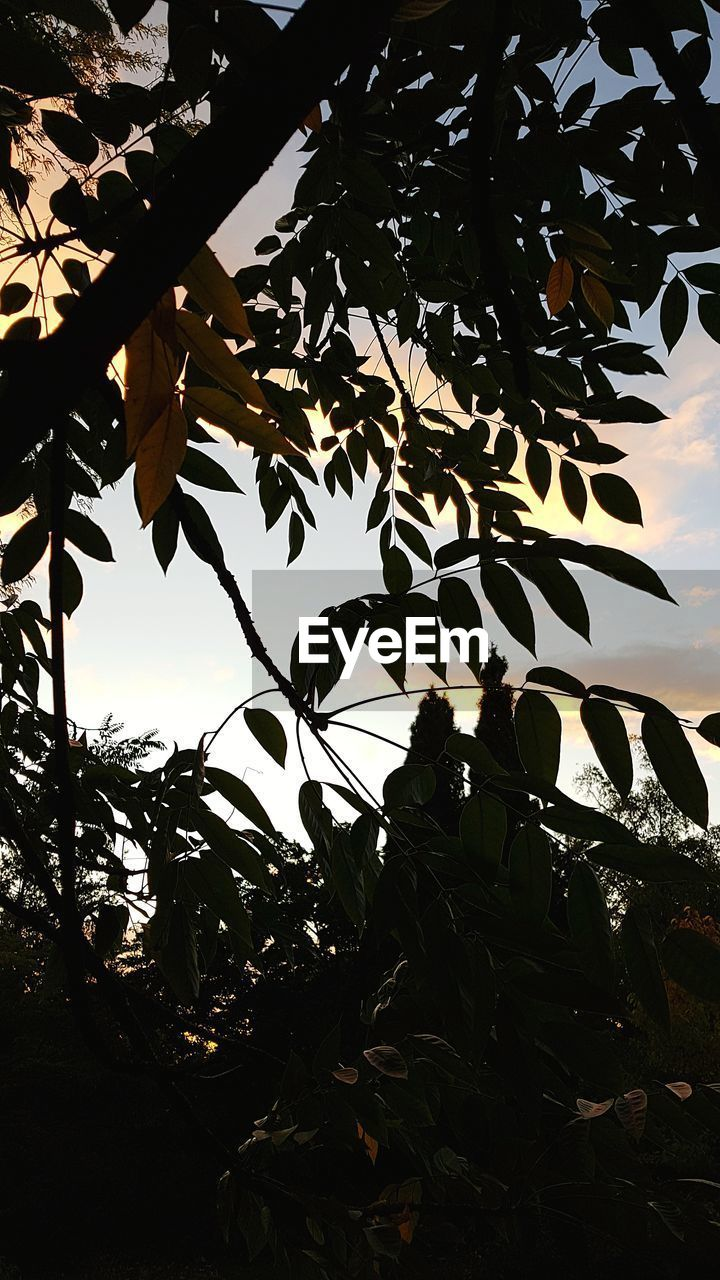 leaf, plant part, plant, sky, nature, growth, tree, silhouette, no people, beauty in nature, tranquility, low angle view, outdoors, branch, sunset, day, sunlight, close-up, tranquil scene, scenics - nature, leaves, change