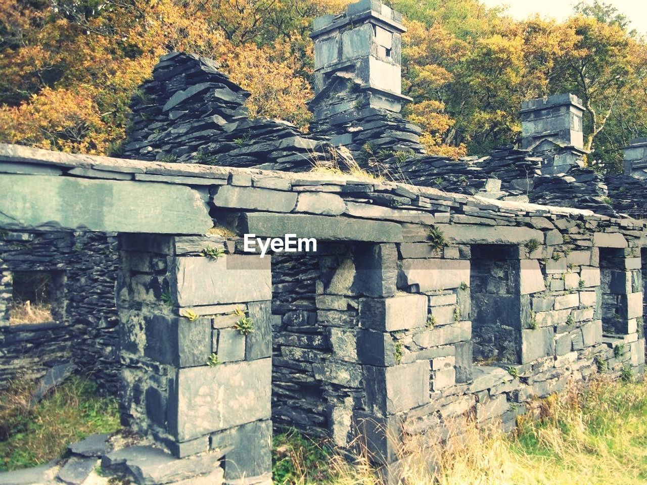 architecture, built structure, building exterior, history, no people, tree, old ruin, ancient, day, outdoors, nature
