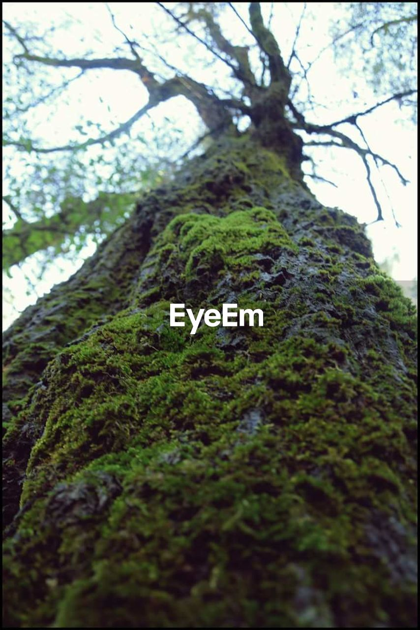 tree, nature, growth, low angle view, moss, tranquility, day, no people, beauty in nature, forest, branch, outdoors, tree trunk, close-up, sky