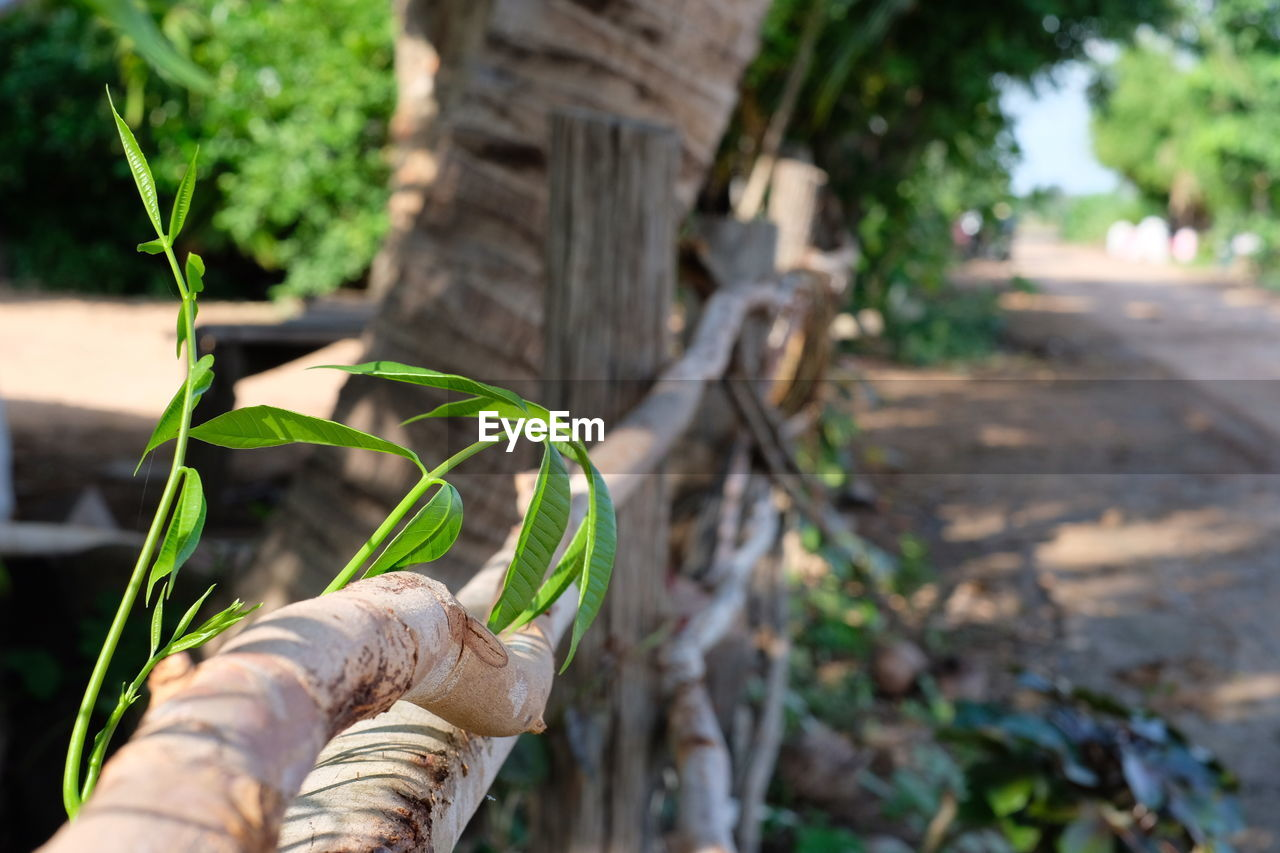 focus on foreground, plant, nature, green color, day, wood - material, growth, leaf, plant part, close-up, outdoors, footpath, selective focus, no people, architecture, metal, tree, the way forward, built structure