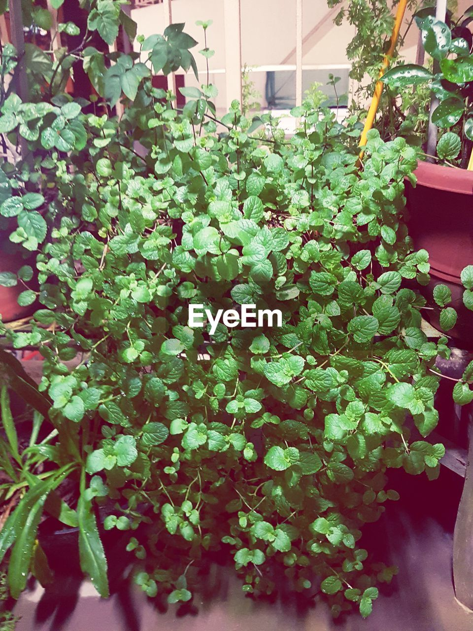 growth, plant, plant part, leaf, green color, beauty in nature, potted plant, nature, no people, day, freshness, outdoors, botany, vulnerability, abundance, close-up, fragility, high angle view, flower, architecture, flower pot, plant nursery, houseplant, gardening