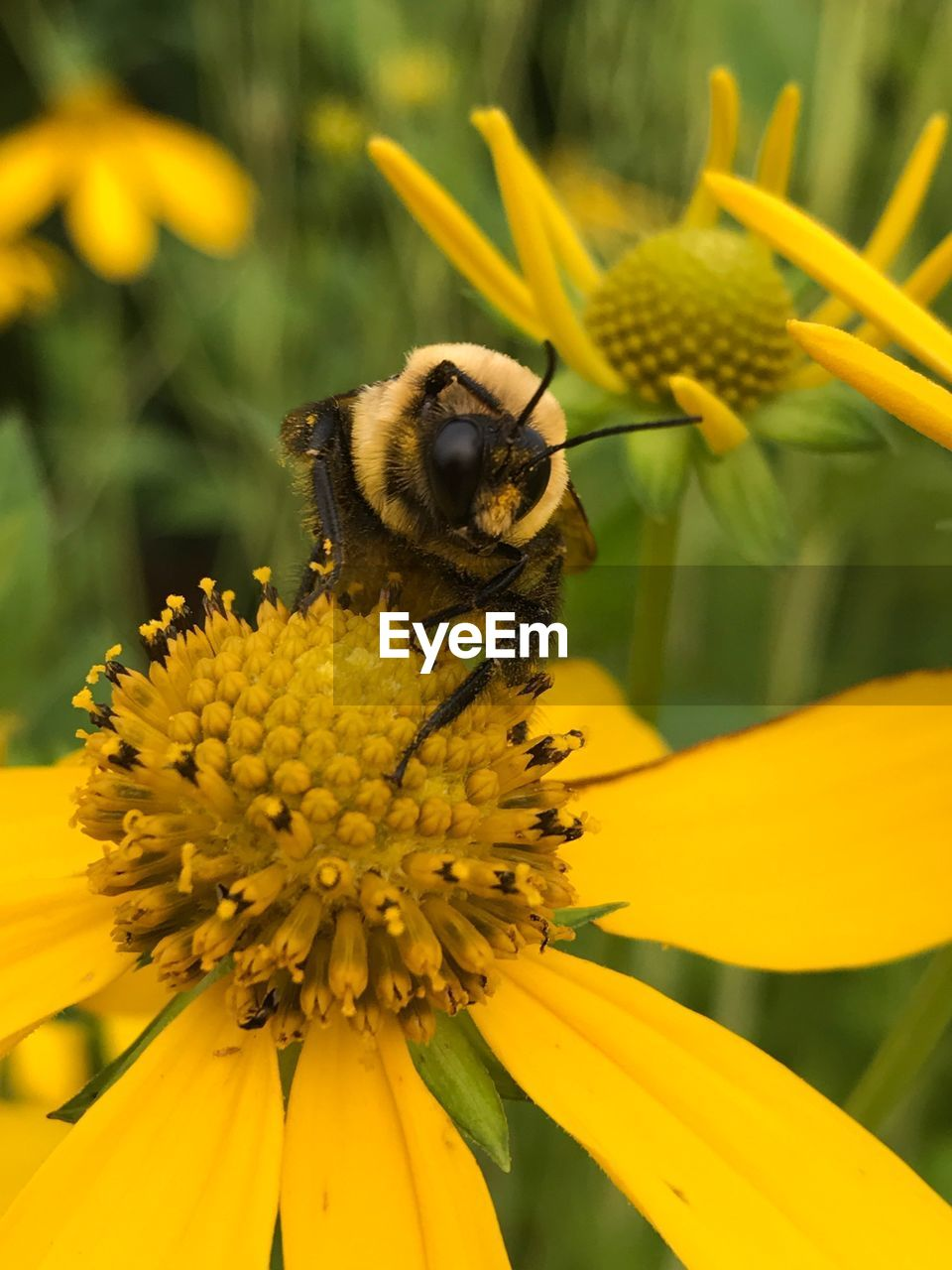 flower, flowering plant, yellow, animal themes, animal wildlife, invertebrate, fragility, animals in the wild, plant, petal, animal, insect, one animal, vulnerability, beauty in nature, flower head, growth, bee, freshness, close-up, pollination, pollen, no people