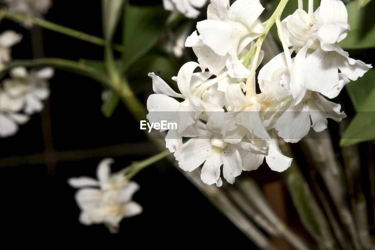 flower, petal, white color, growth, fragility, nature, beauty in nature, flower head, plant, close-up, freshness, no people, focus on foreground, blooming, outdoors, day