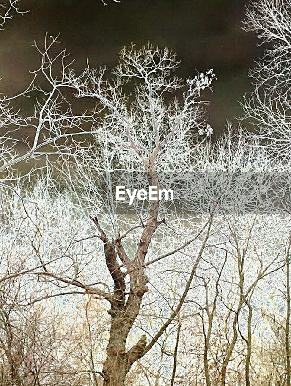 bare tree, branch, tree, nature, outdoors, no people, winter, day, beauty in nature, cold temperature, autumn, backgrounds, snow, water, sky