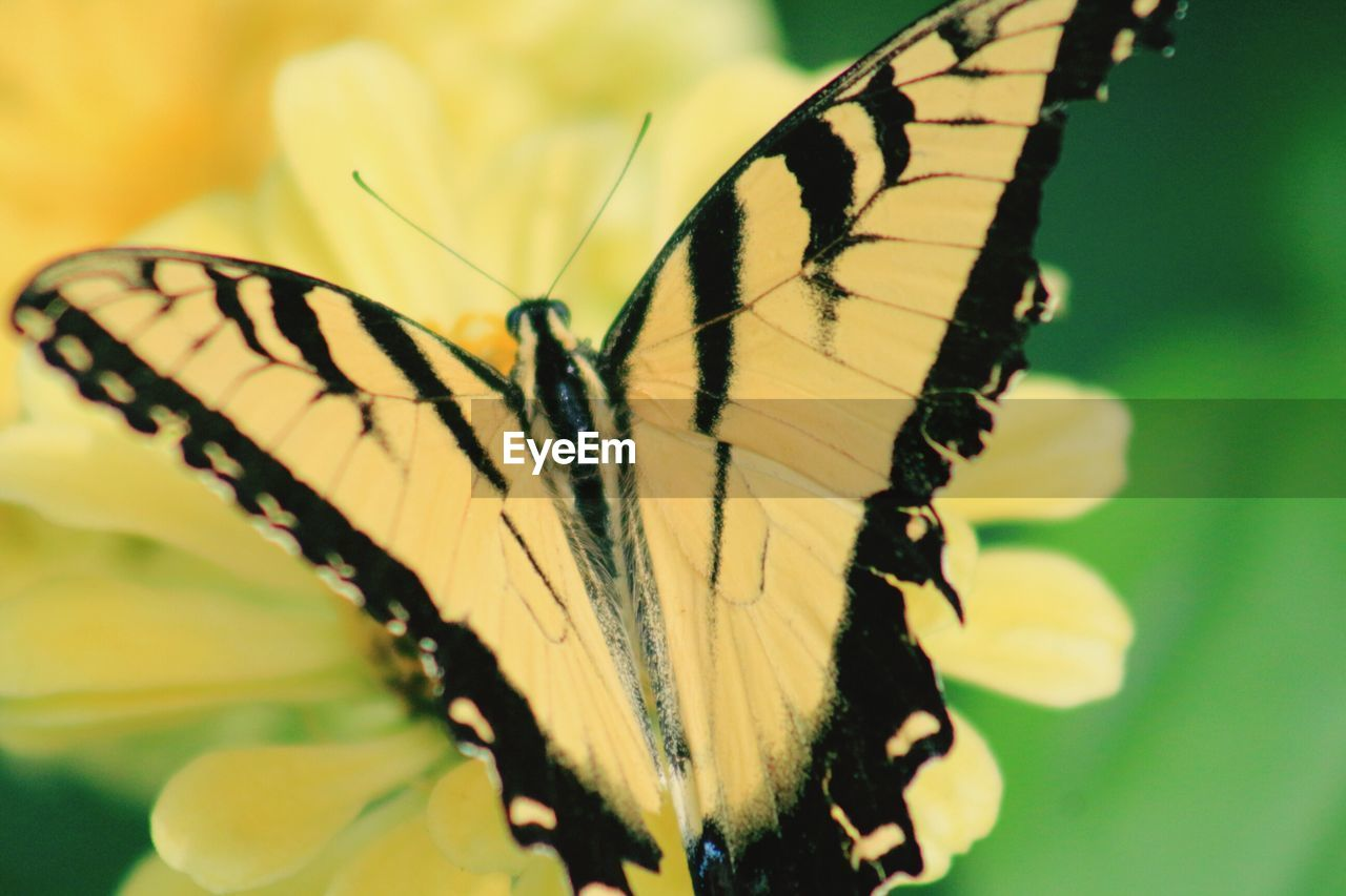 insect, butterfly - insect, animal themes, one animal, animals in the wild, animal wing, animal wildlife, close-up, no people, butterfly, focus on foreground, animal markings, beauty in nature, nature, day, outdoors, full length, fragility, perching, spread wings, freshness