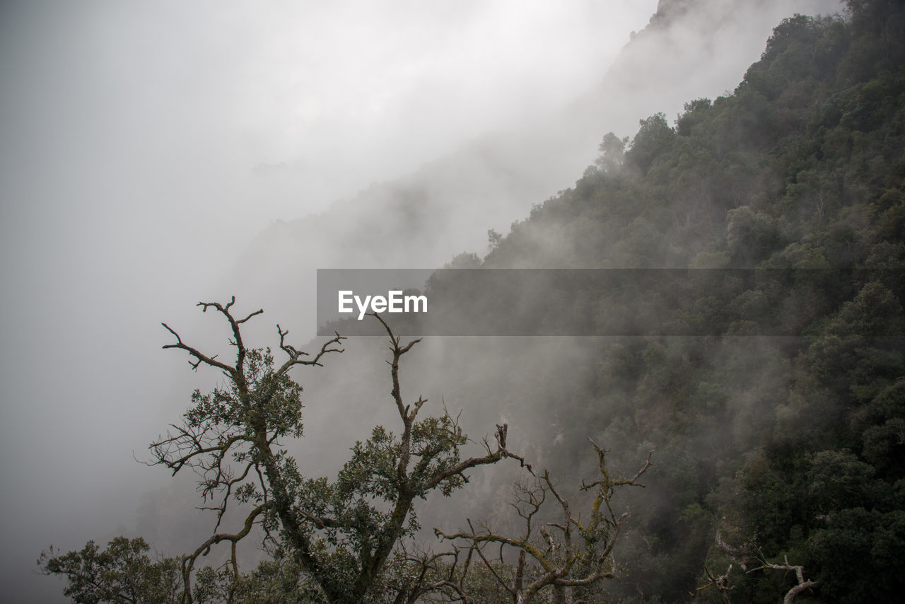 tree, plant, beauty in nature, sky, tranquility, tranquil scene, nature, fog, scenics - nature, no people, non-urban scene, day, mountain, growth, cloud - sky, outdoors, low angle view, environment, smoke - physical structure, pollution
