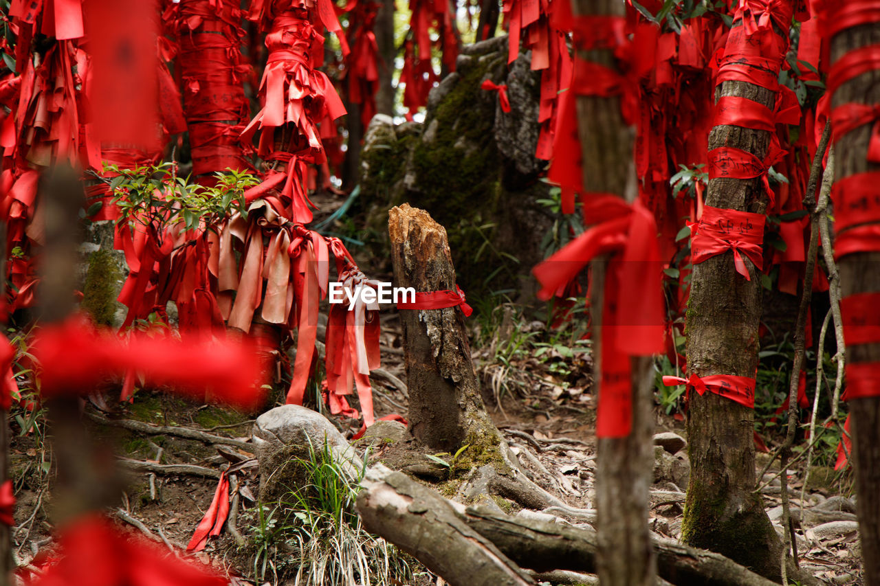 red, religion, spirituality, belief, place of worship, day, no people, plant, selective focus, hanging, nature, built structure, building, tree, outdoors, shrine