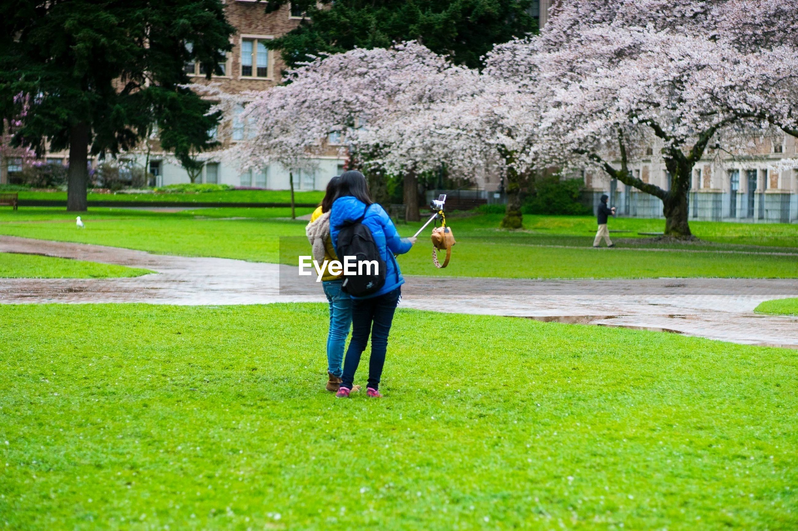grass, full length, lifestyles, leisure activity, green color, casual clothing, tree, park - man made space, lawn, field, childhood, grassy, girls, person, building exterior, boys, rear view, park