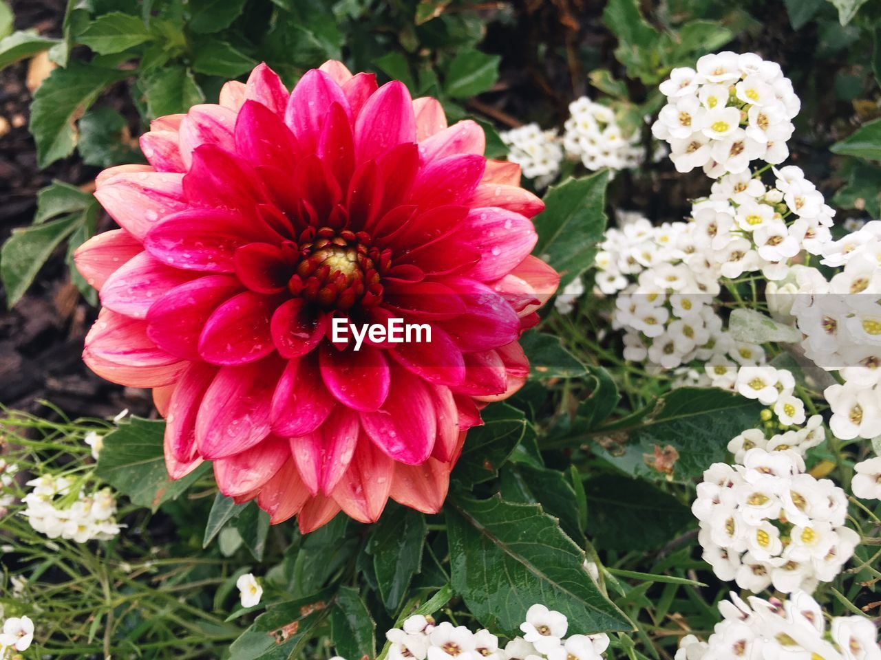 flower, beauty in nature, fragility, flower head, petal, growth, nature, freshness, blooming, plant, day, no people, outdoors, park - man made space, zinnia, close-up