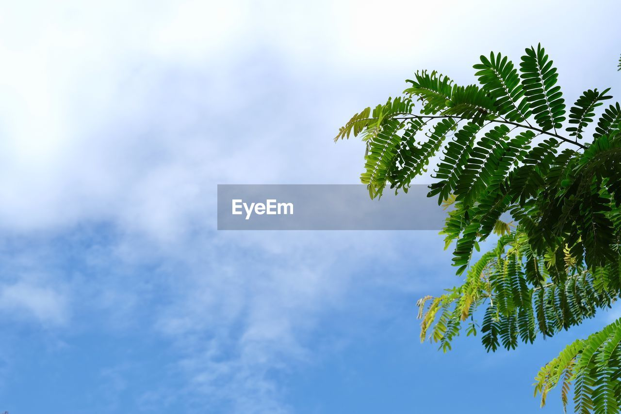 plant, tree, leaf, plant part, low angle view, growth, sky, green color, beauty in nature, no people, nature, cloud - sky, tranquility, day, outdoors, branch, focus on foreground, close-up, sunlight, blue