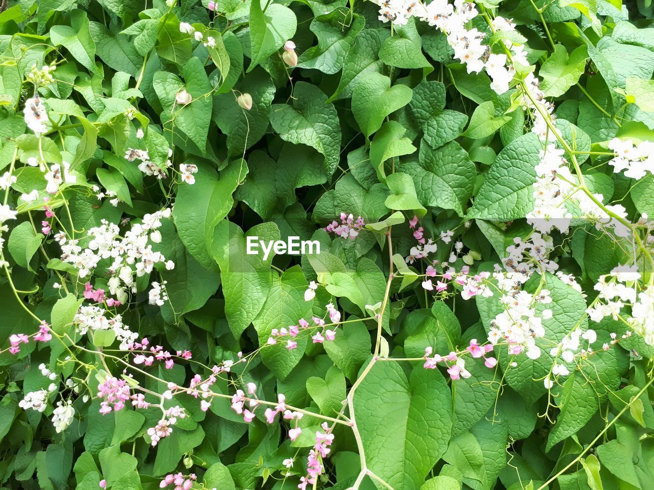 growth, plant, plant part, leaf, flowering plant, flower, green color, freshness, beauty in nature, nature, day, fragility, vulnerability, high angle view, no people, outdoors, petal, close-up, pink color, flower head, springtime