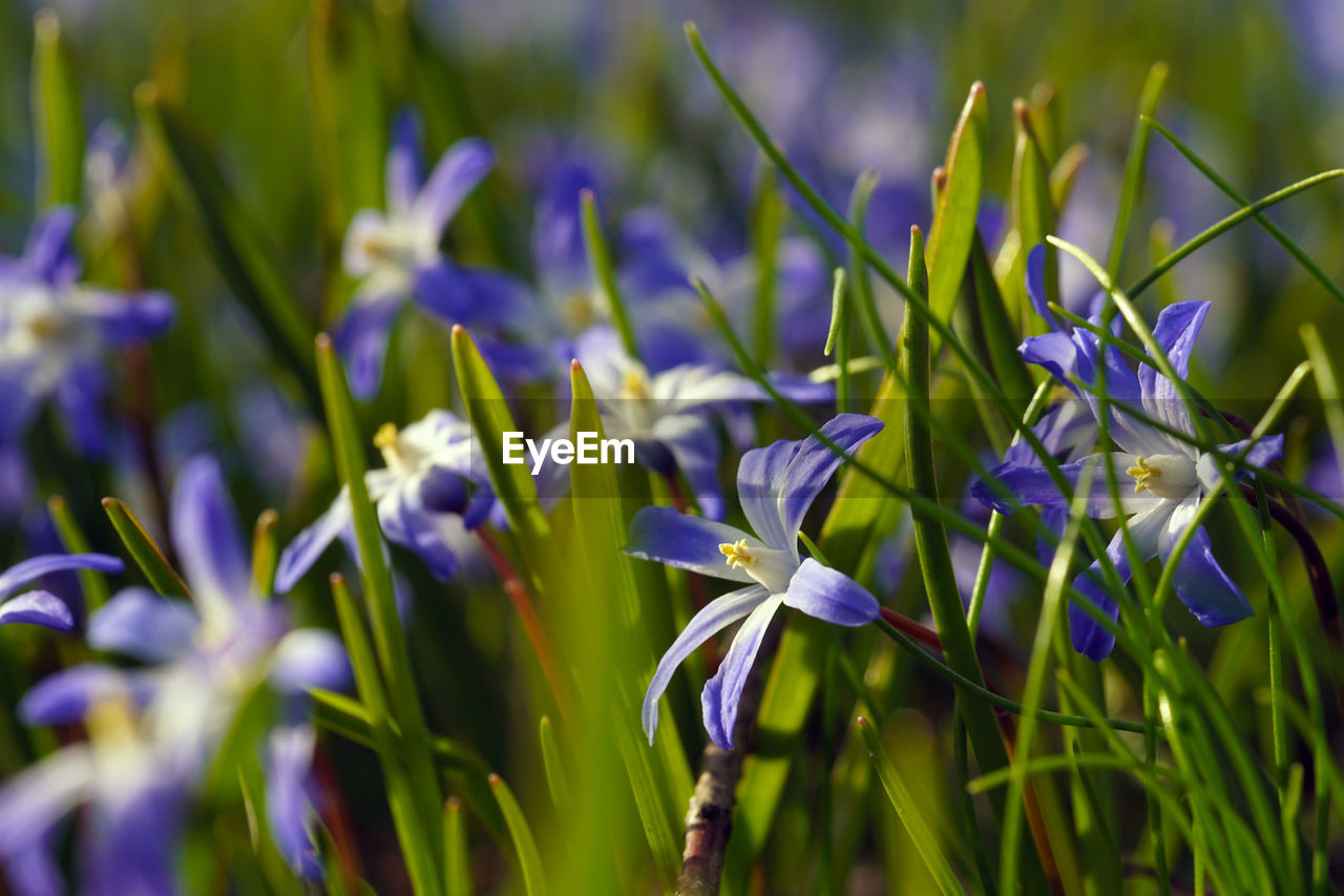 growth, nature, plant, beauty in nature, flower, purple, no people, fragility, blue, freshness, day, outdoors, close-up