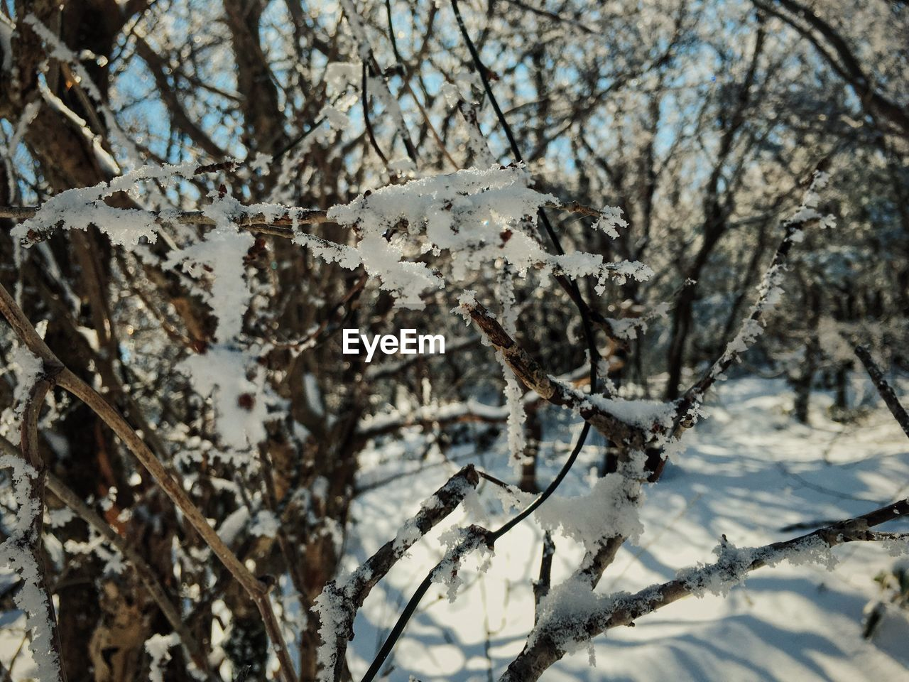winter, snow, cold temperature, nature, tree, branch, beauty in nature, day, no people, weather, white color, outdoors, twig, fragility, close-up, freshness
