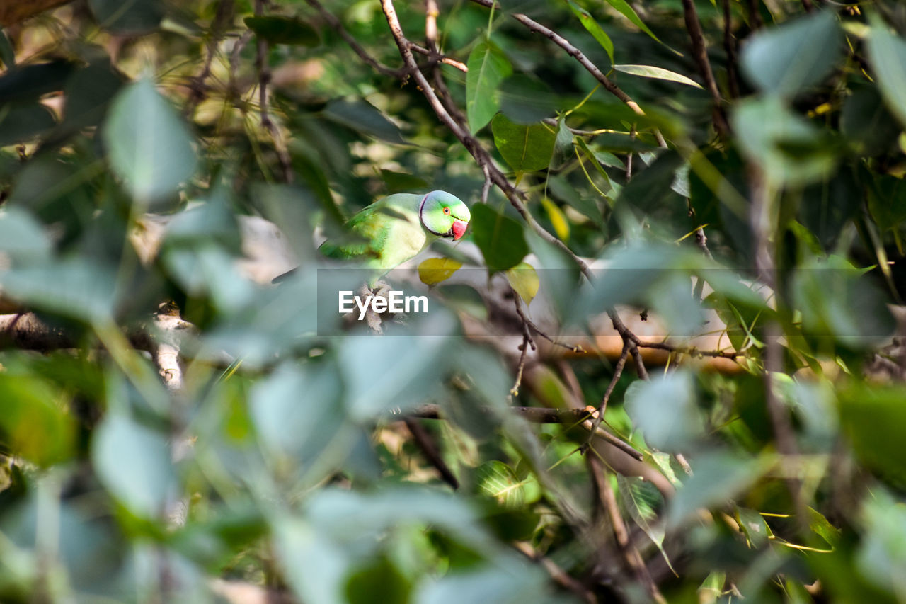 selective focus, plant, green color, growth, no people, animal, animal themes, animal wildlife, day, bird, nature, tree, one animal, vertebrate, animals in the wild, beauty in nature, leaf, plant part, branch, perching, outdoors