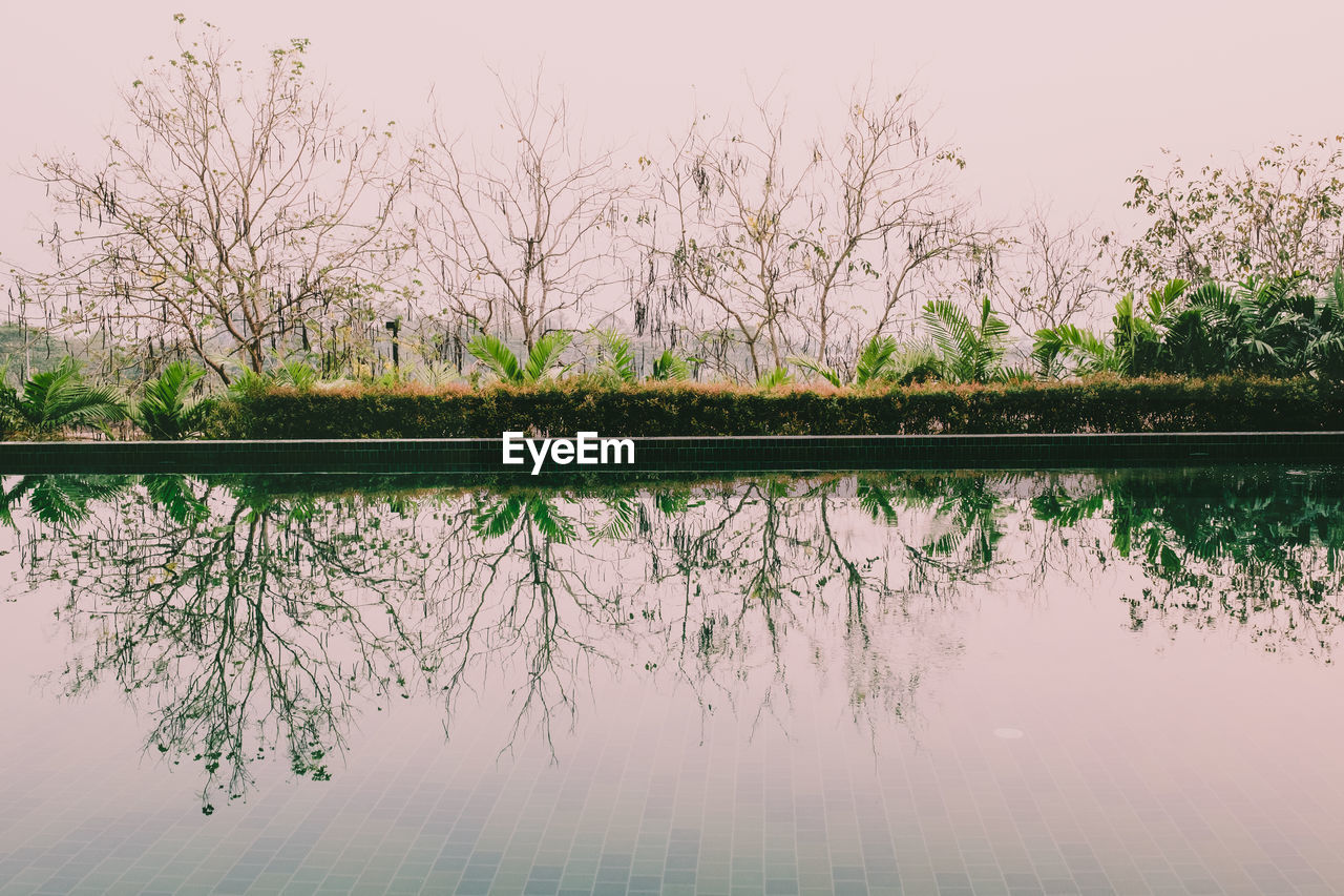 reflection, plant, lake, water, tree, beauty in nature, tranquility, nature, no people, scenics - nature, sky, waterfront, tranquil scene, day, idyllic, bare tree, growth, outdoors, standing water