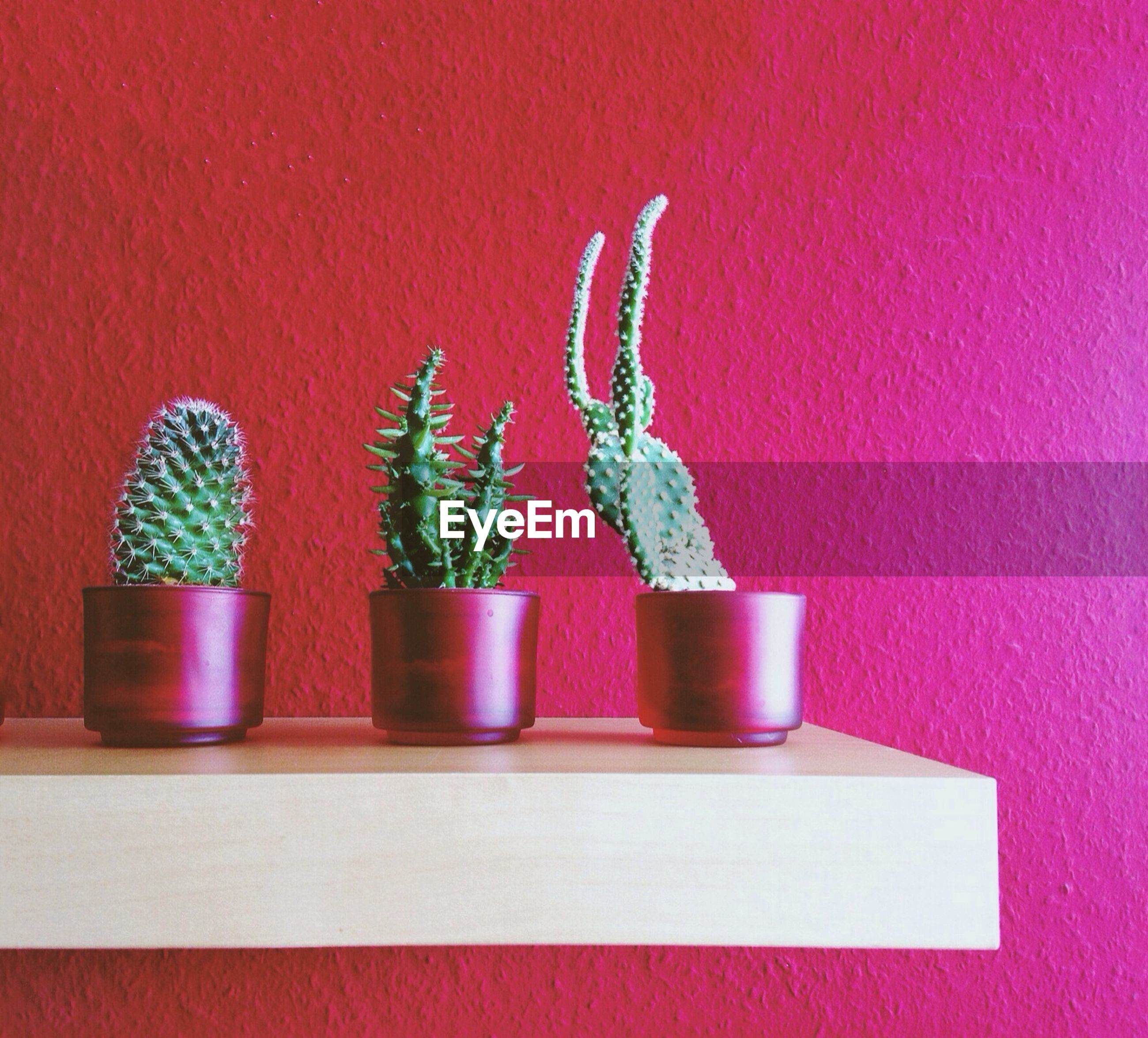 Cactus plant in pots on rack