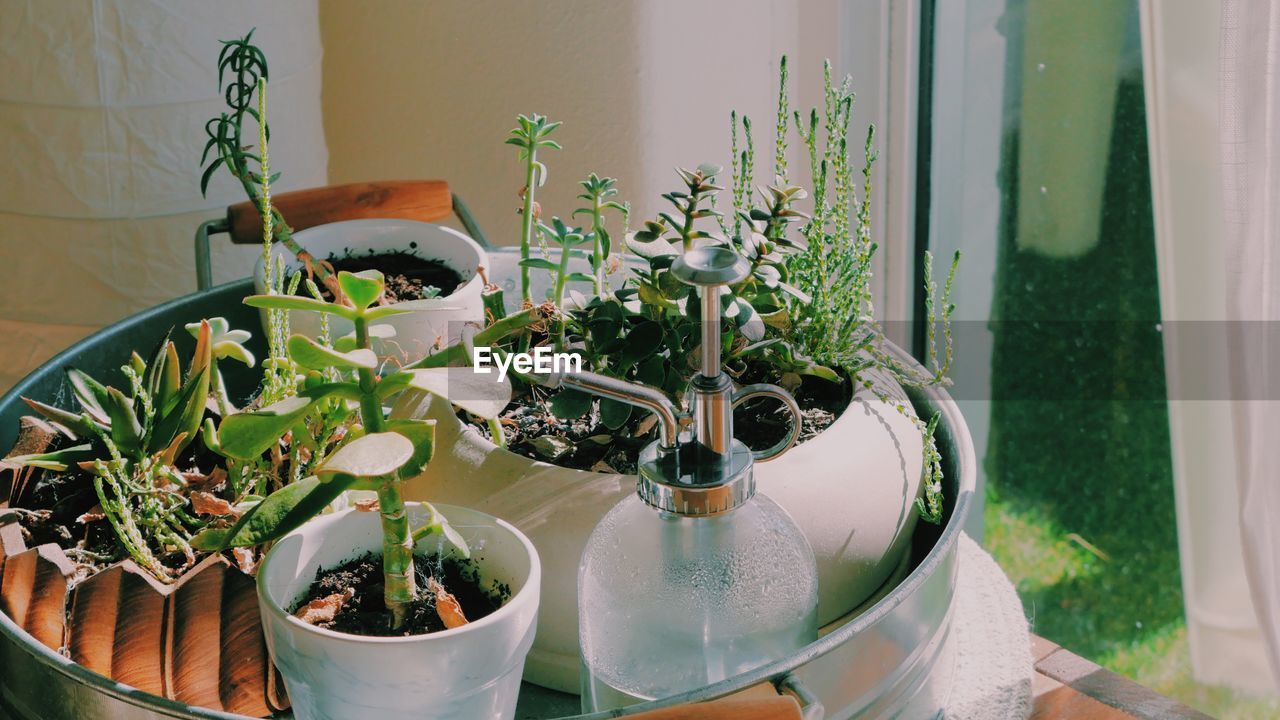 plant, potted plant, growth, nature, green color, no people, beauty in nature, day, window, table, indoors, leaf, container, plant part, flower pot, seat, close-up, glass - material, freshness, houseplant, gardening