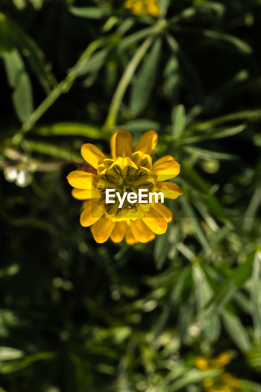 flower, yellow, growth, nature, petal, beauty in nature, plant, freshness, blooming, fragility, flower head, outdoors, no people, close-up, day