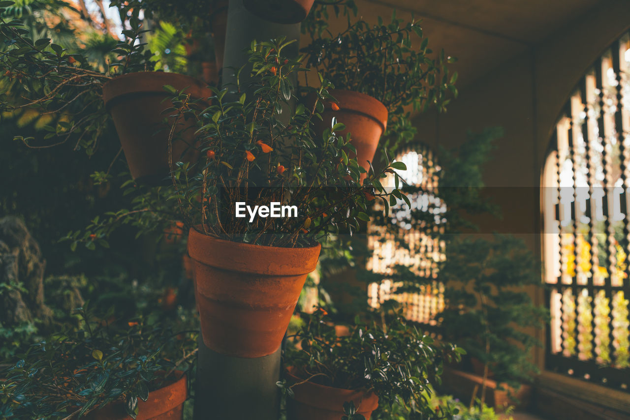 potted plant, growth, plant, front or back yard, nature, outdoors, focus on foreground, day, no people, flower, beauty in nature, close-up, greenhouse, freshness
