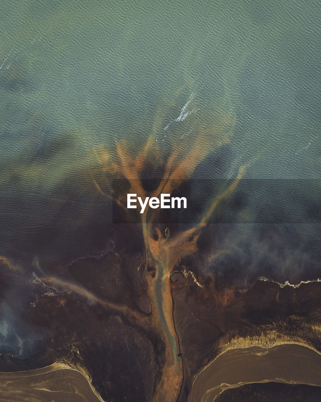 Drone shot of trees in lake
