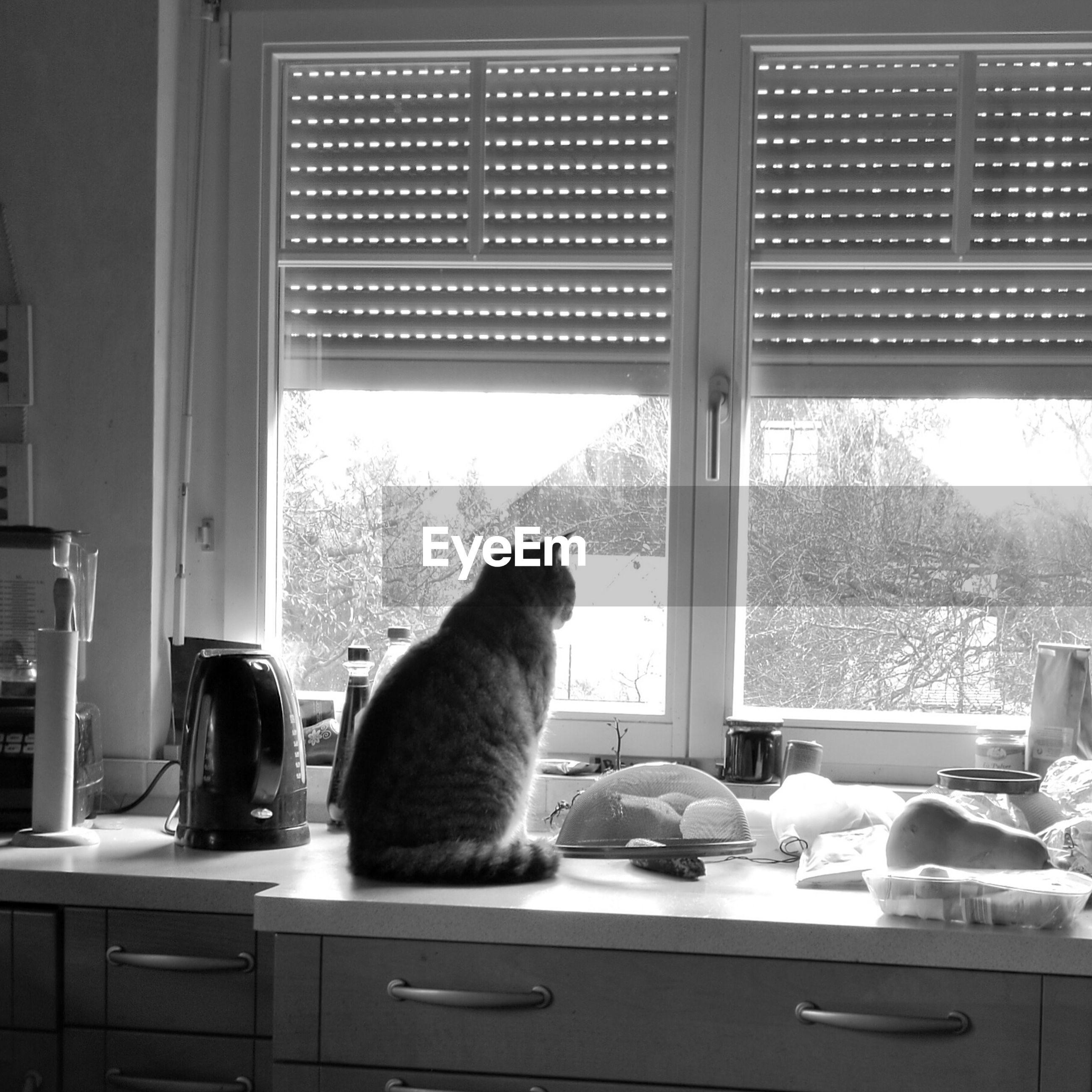 CAT SITTING IN GLASS WINDOW
