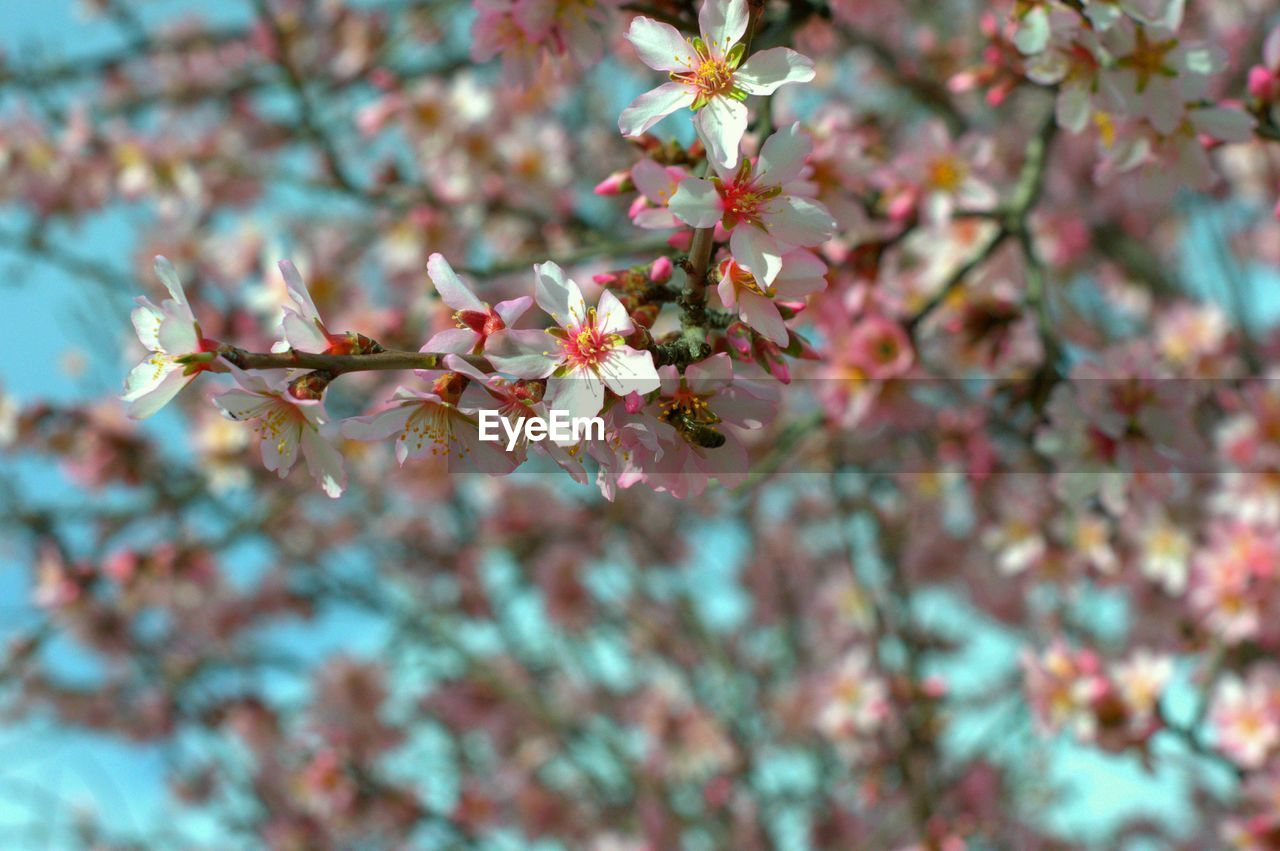 flower, growth, fragility, tree, beauty in nature, nature, branch, blossom, springtime, freshness, petal, twig, no people, day, close-up, selective focus, outdoors, flower head, blooming