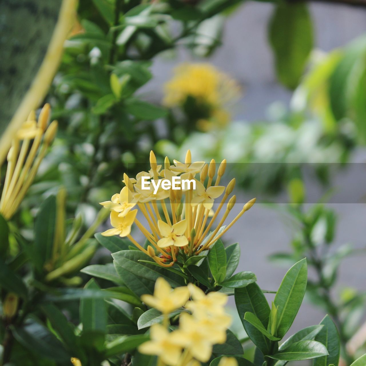 flower, fragility, petal, freshness, growth, beauty in nature, yellow, nature, plant, flower head, green color, blooming, leaf, no people, outdoors, day, close-up