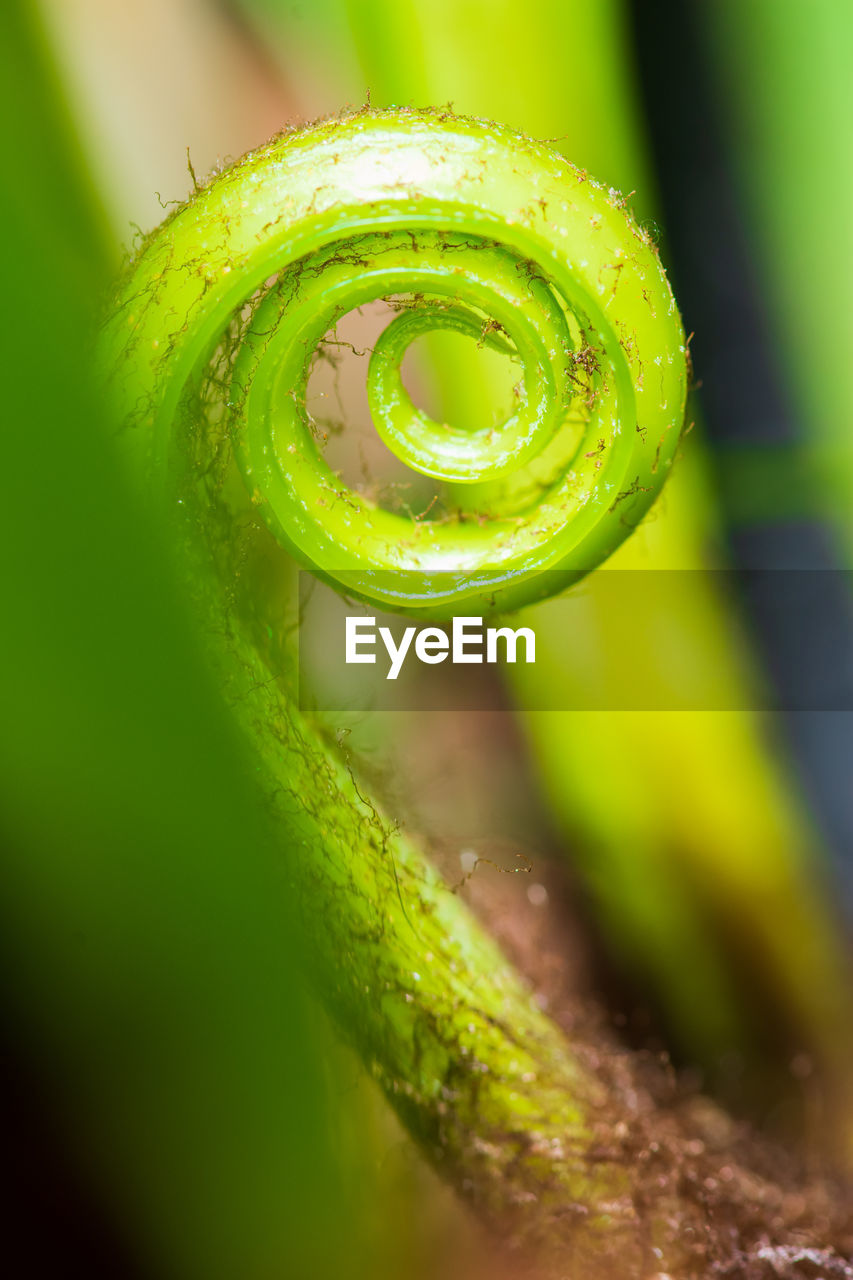 green color, close-up, selective focus, no people, plant, tendril, spiral, nature, beauty in nature, growth, day, freshness, drop, water, curled up, focus on foreground, extreme close-up, wet, vulnerability, dew, purity