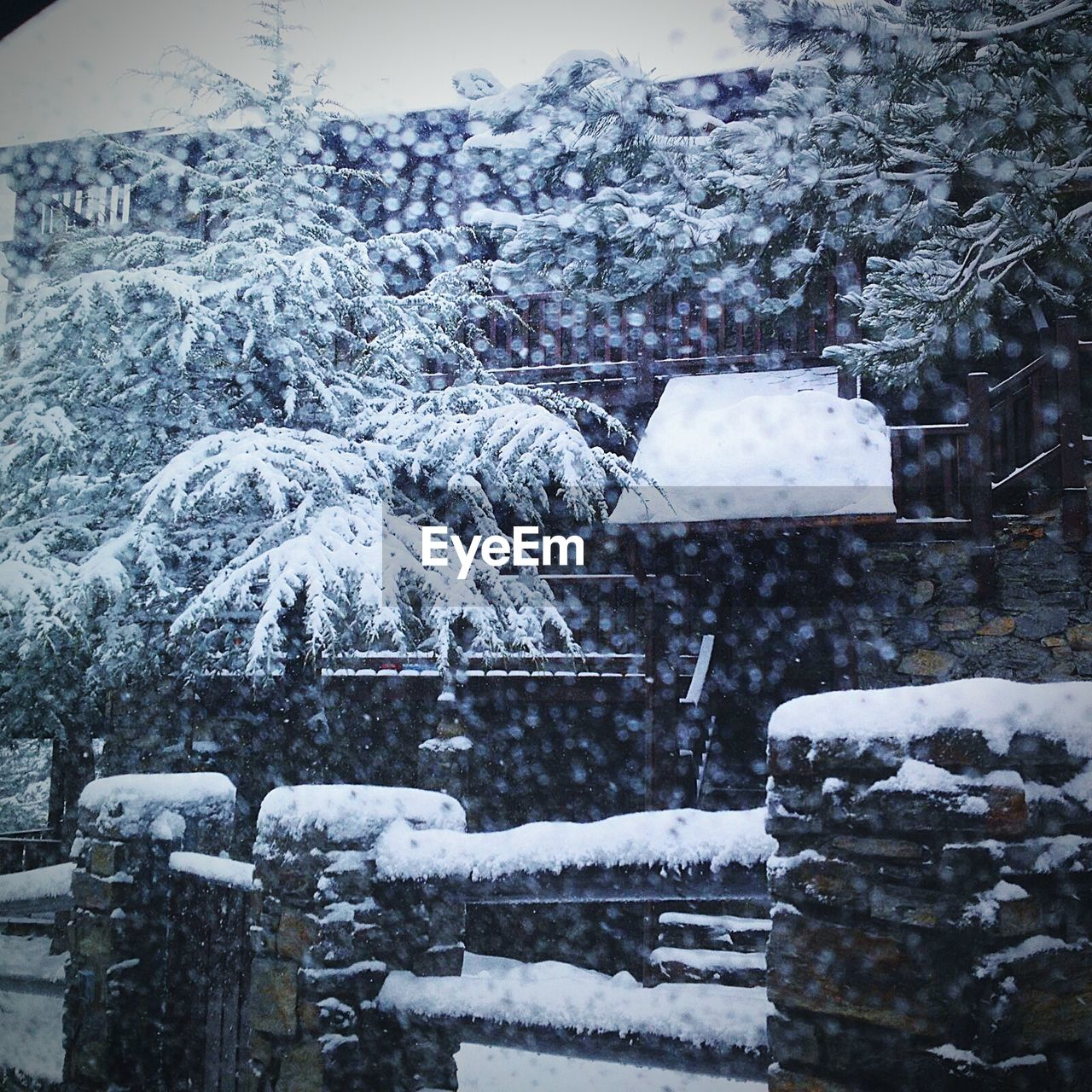winter, snow, cold temperature, weather, nature, outdoors, white color, no people, frozen, day, tranquility, beauty in nature, tree