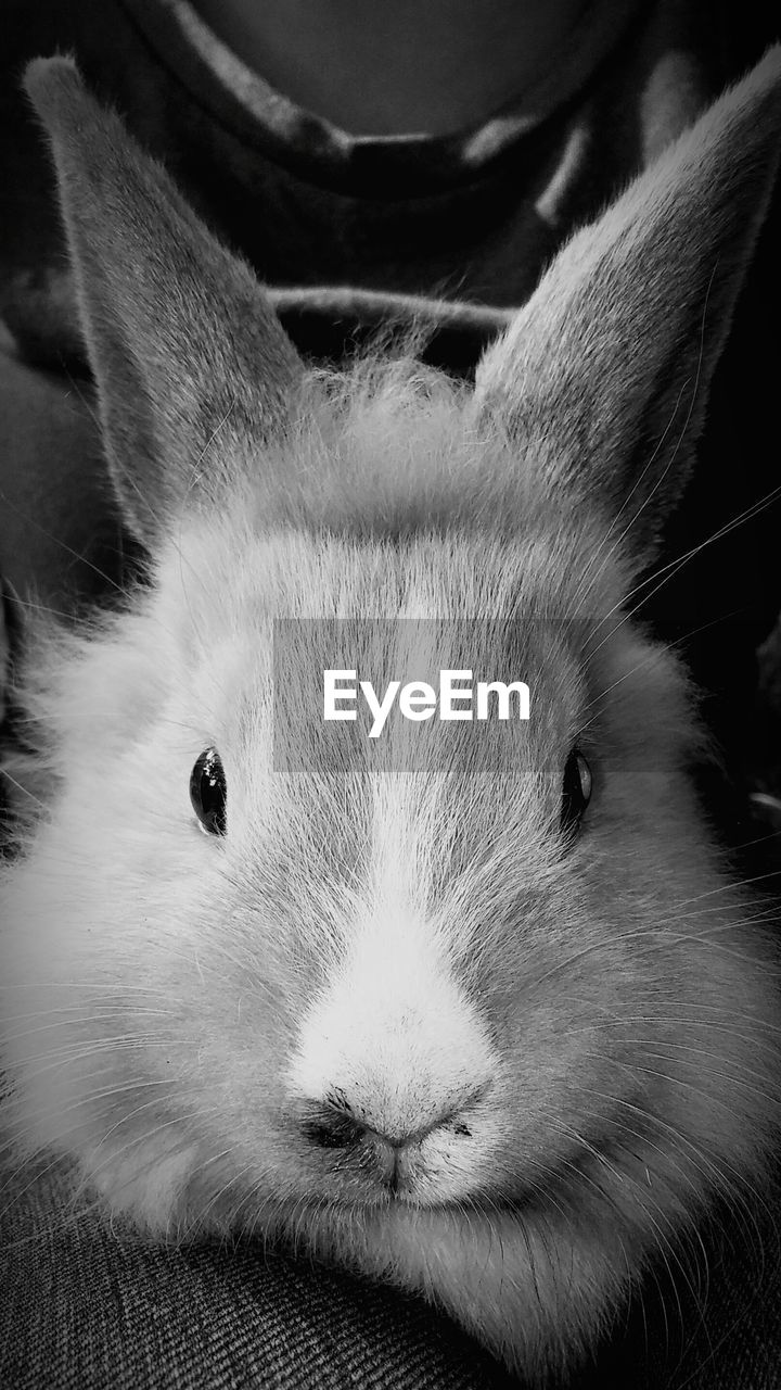 one animal, animal themes, pets, domestic animals, looking at camera, portrait, mammal, animal head, close-up, no people, indoors, day
