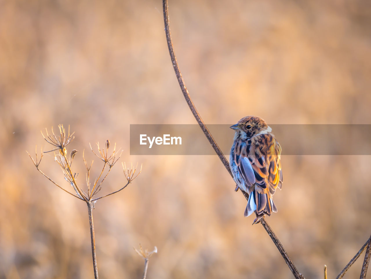 animals in the wild, animal themes, one animal, focus on foreground, animal wildlife, animal, bird, vertebrate, plant, perching, no people, day, nature, close-up, beauty in nature, branch, outdoors, selective focus, tree, twig