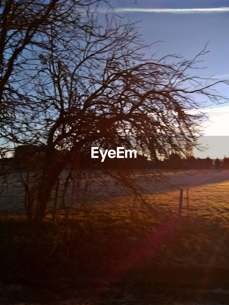 tree, plant, sky, bare tree, nature, tranquility, land, beauty in nature, no people, tranquil scene, branch, scenics - nature, field, outdoors, non-urban scene, sunset, environment, landscape, growth, forest