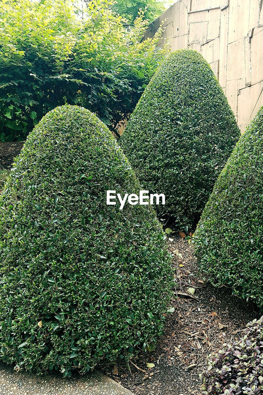 green color, growth, topiary, outdoors, nature, day, plant, no people, botanical garden, beauty in nature, close-up