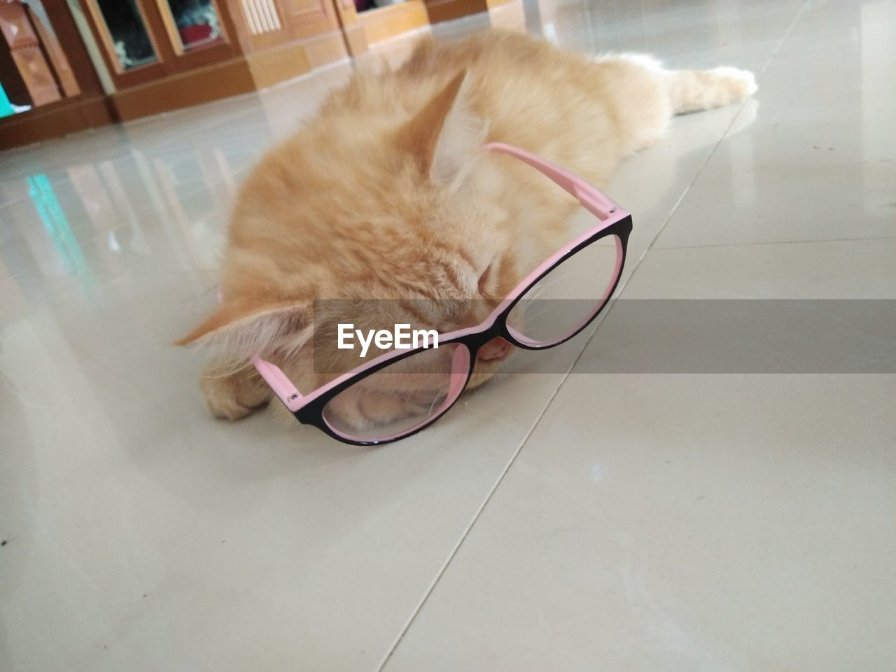 pets, domestic, cat, domestic animals, animal, mammal, domestic cat, animal themes, feline, one animal, vertebrate, indoors, no people, relaxation, flooring, glasses, close-up, eyeglasses, home interior, tiled floor, whisker, ginger cat