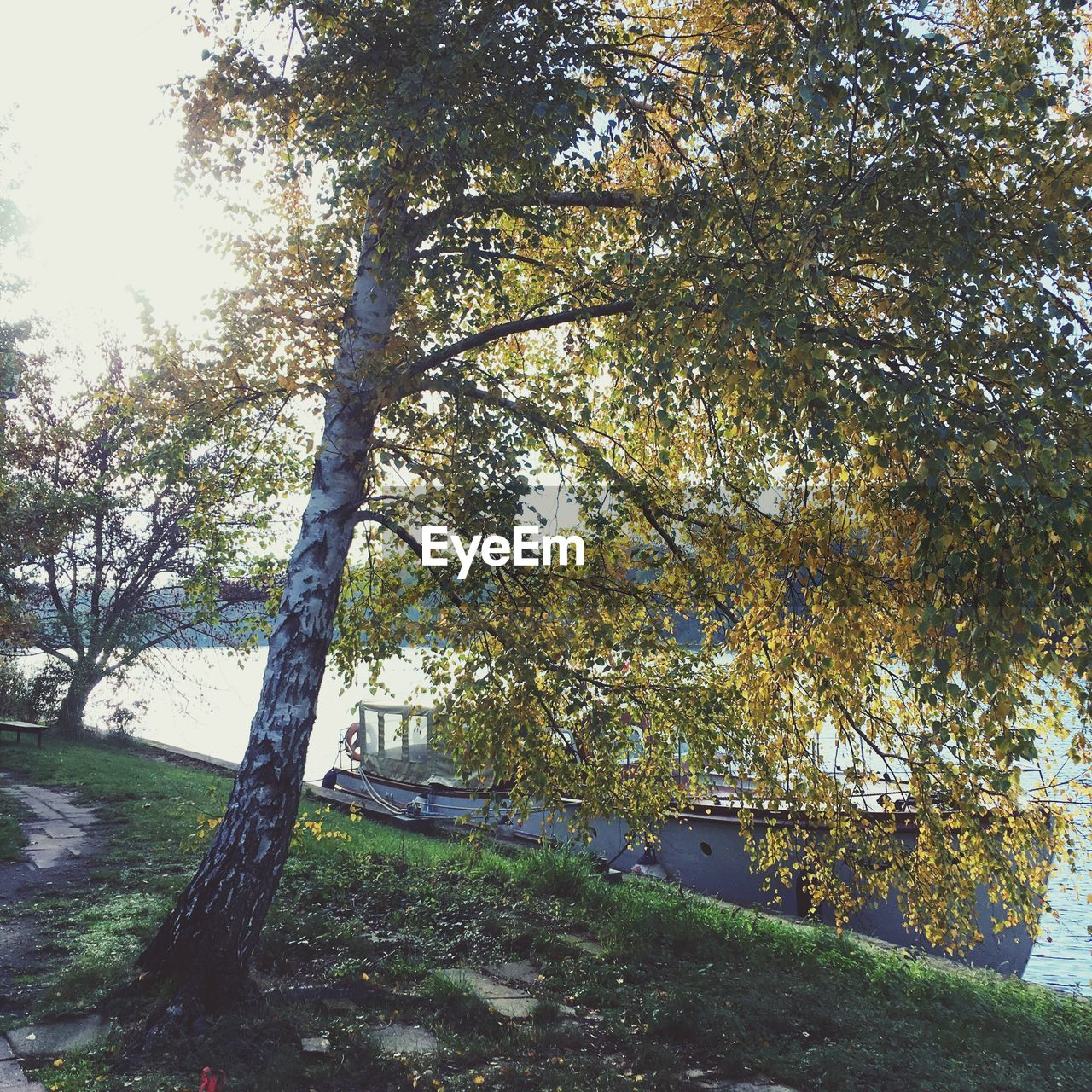 tree, no people, nature, growth, day, autumn, tranquil scene, outdoors, beauty in nature, tranquility, branch, scenics, landscape, grass, sky