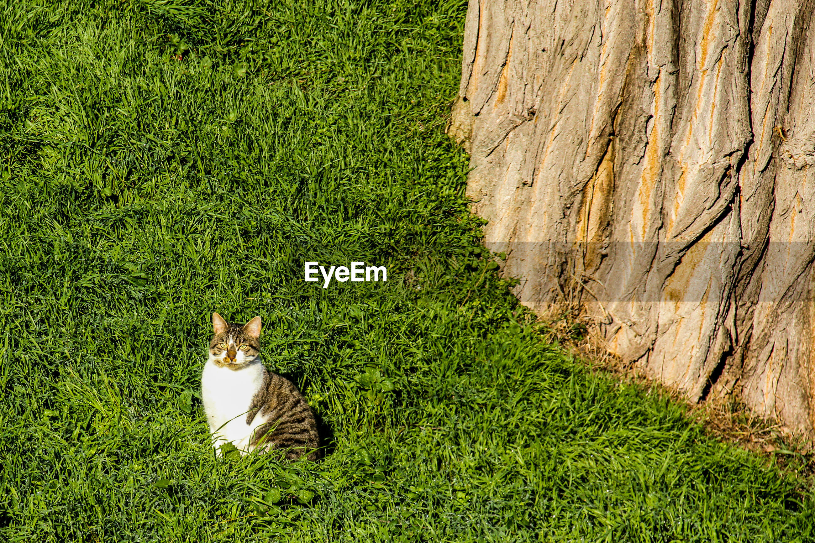 CAT LYING ON A LAND