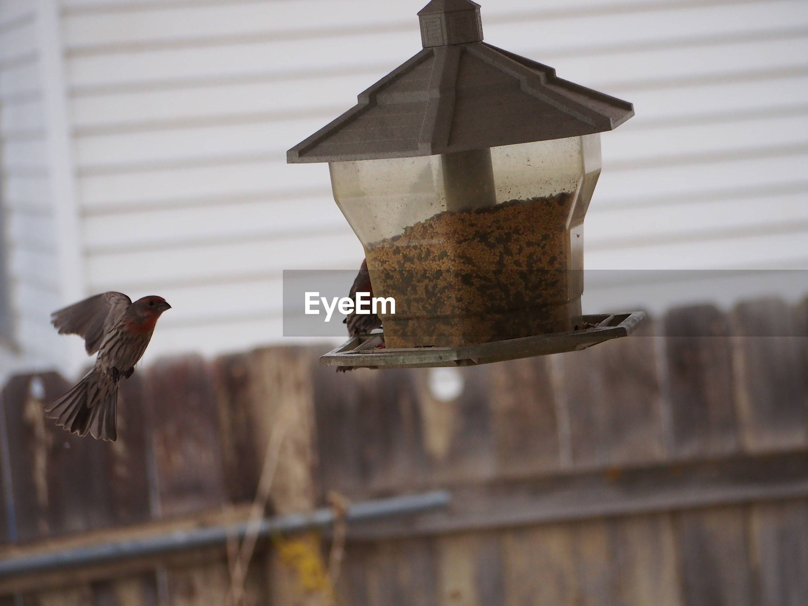 Side view of a bird against blurred fence