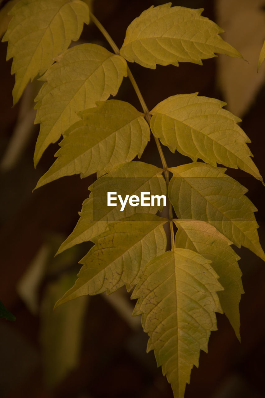 leaf, nature, growth, beauty in nature, close-up, no people, plant, outdoors, day, fragility, freshness