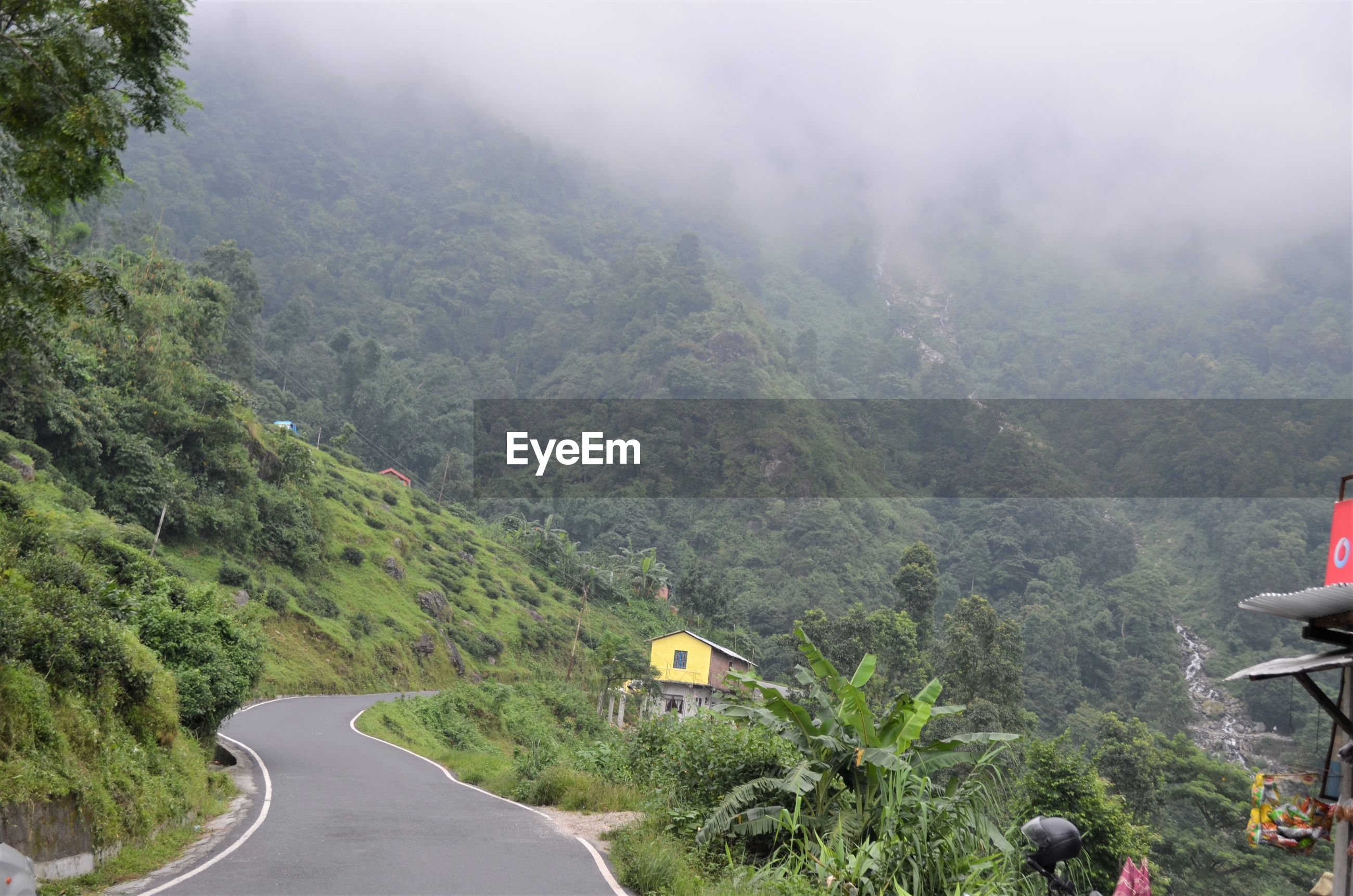 ROAD AMIDST TREES AND MOUNTAIN