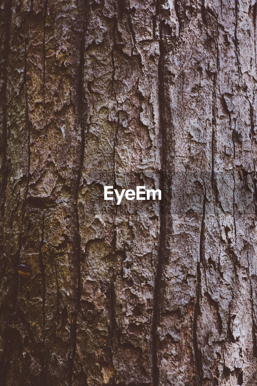 textured, full frame, trunk, tree trunk, backgrounds, tree, close-up, rough, no people, pattern, plant, brown, plant bark, bark, nature, natural pattern, toughness, wood - material, growth, day, textured effect, natural condition