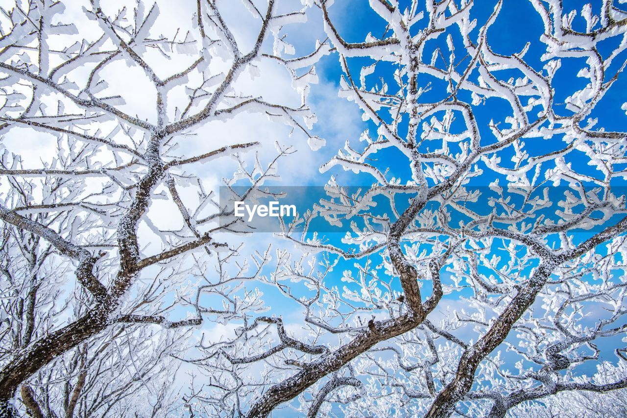 Low angle view of frozen tree against sky during winter