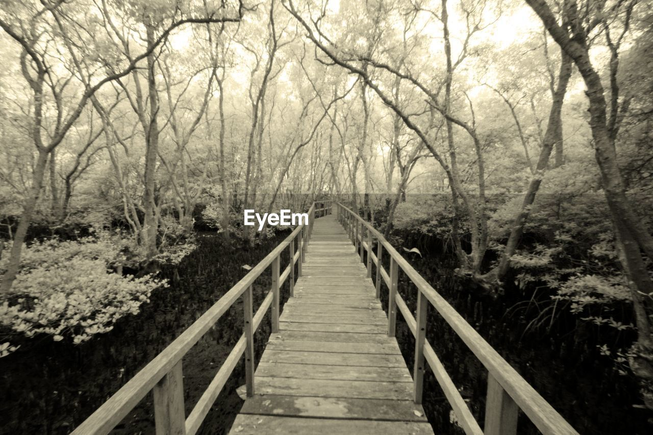 tree, direction, the way forward, plant, forest, nature, railing, wood - material, no people, land, tranquility, connection, bridge, tranquil scene, diminishing perspective, day, footbridge, built structure, architecture, beauty in nature, outdoors, bridge - man made structure, wood